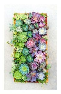 When Blake and I finally own our own home, one of my first outdoor projects will be to create an ombre style succulent wall like this one!