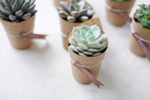 They are super cute! Have you ever seen a baby succulent?... well now you have. I bet you want one now don't you?