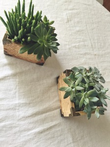 These little succulent boxes were super easy to make! We bought about 6 different types of mini succulents from the nursery and I found these two small wooden boxes at Marshalls for $5 each. I thought I was being smart by lining the inside of the boxes with sandwich sized ziplock baggies before I put the plants in them, but unfortunately the baggies were not formfitting enough to keep the water from seeping through the bottom of the boxes. I would recommend using foil if you plan on keeping these indoors.